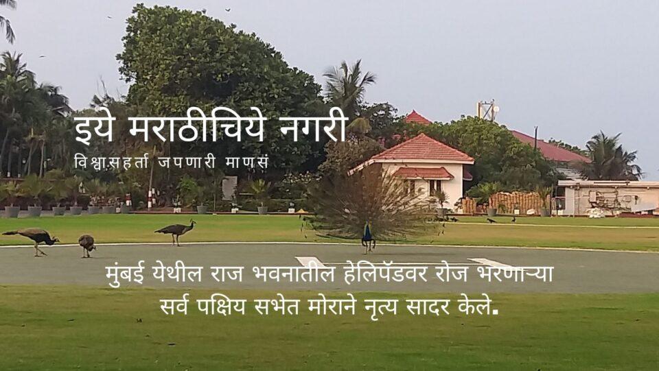 Birds and Peacock meeting on Helipad in Mumbai Rajbhavan
