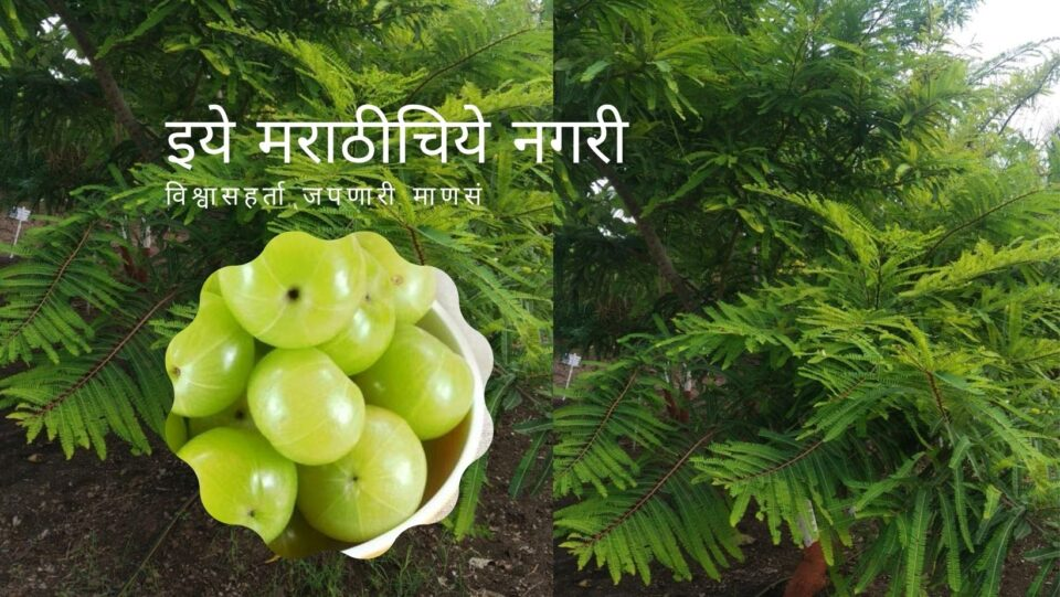Know About Phyllanthus Emblica article by Satish Kanawade