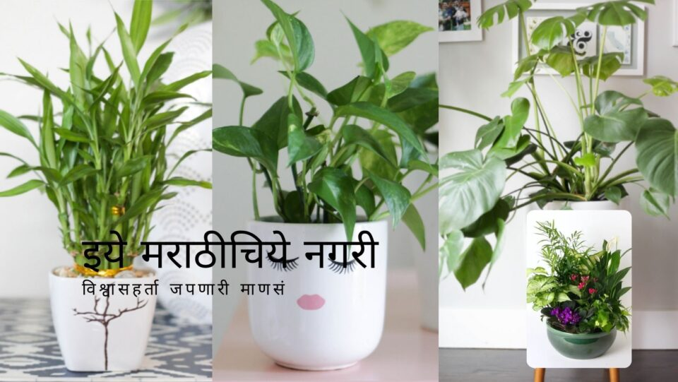 Know about Best Low Light Indoor Plants
