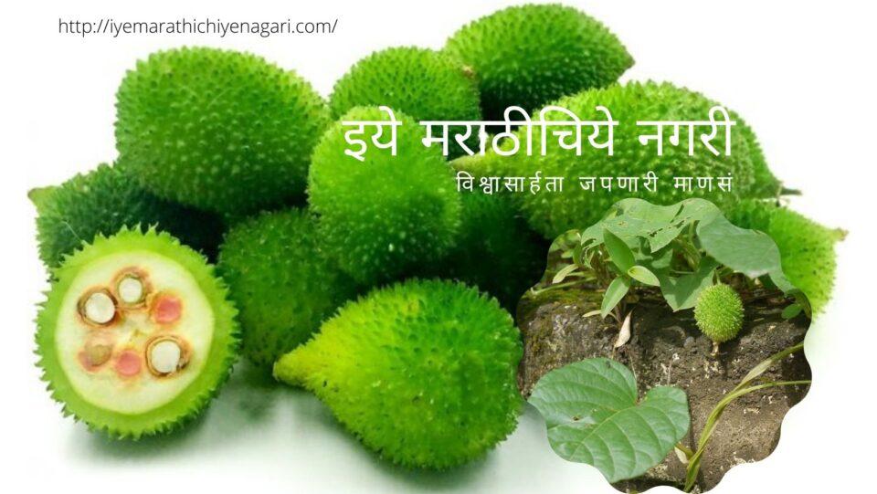 Kartoli Medicinal Plant article by Satish Kanwade