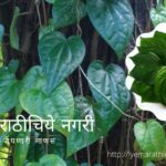 How to Propagate Betel Leaf Plant Tips by Smita Patil