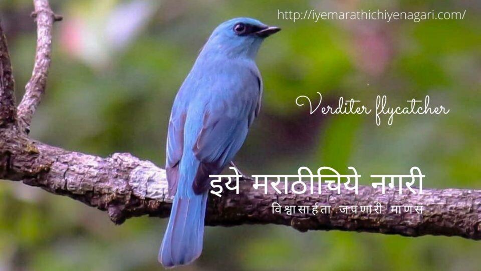 navratri-theme-biodiverstiy in Blue Color by Pratik More